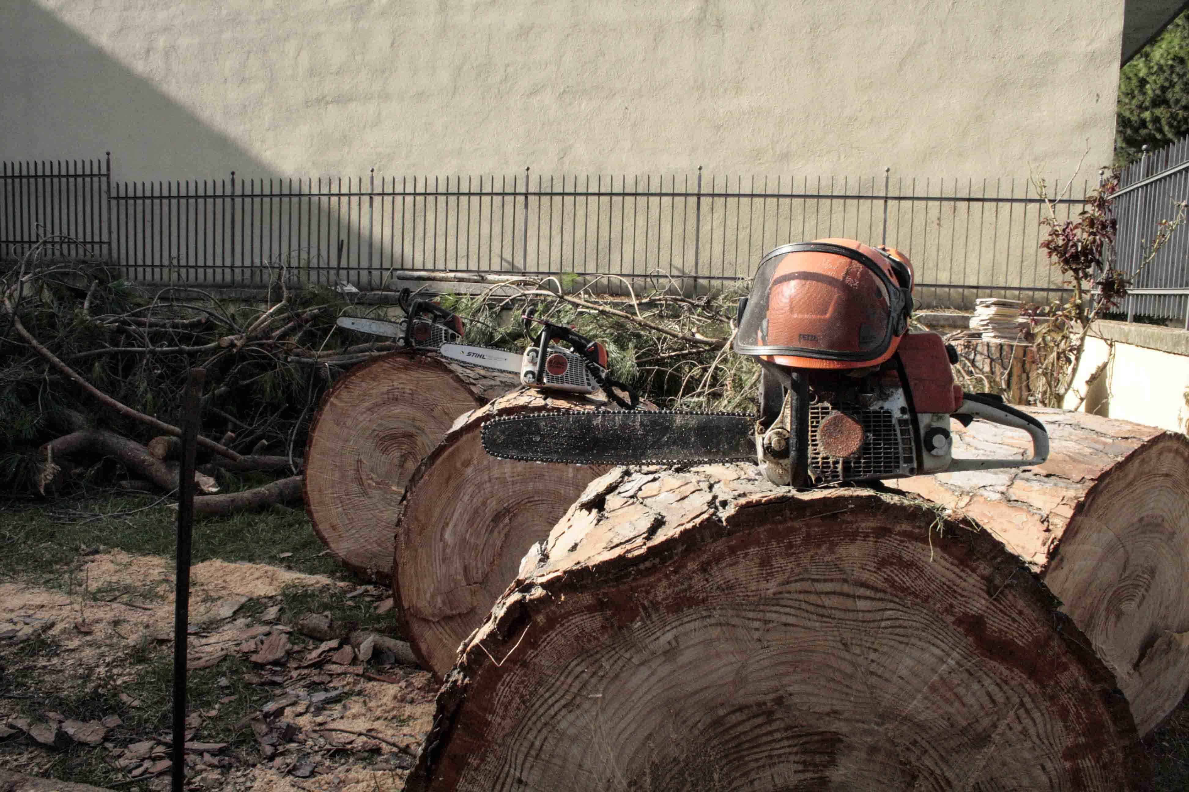 treeworkersnapoli-servizi-abbattimento-alberi-1