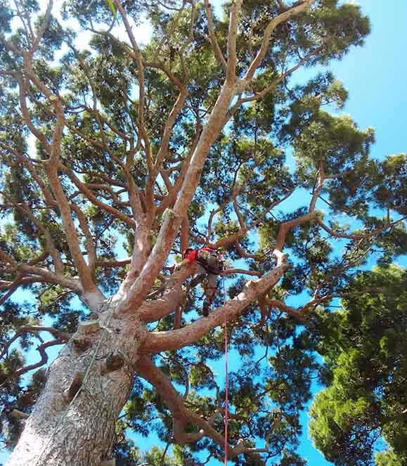 treeworkersnapoli-servizi-potatura-alberi-1