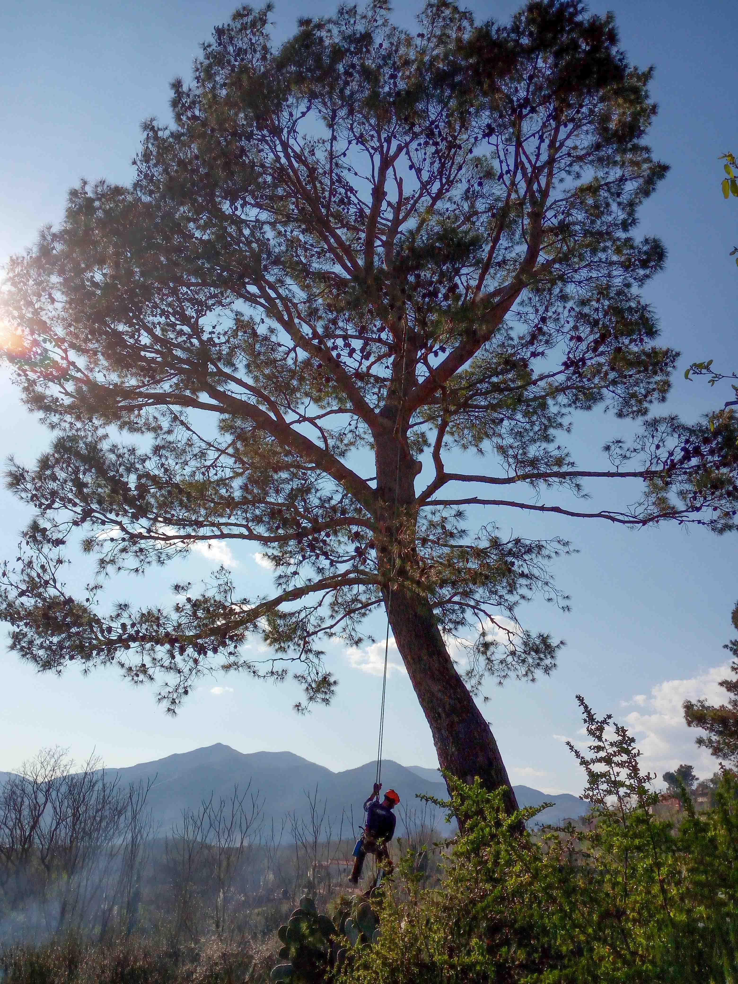 treeworkersnapoli-team-servizi-potatura-alberi